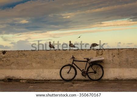 Gulls are permanent companions fishermen. Port of Essaouira, Morocco. - stock photo