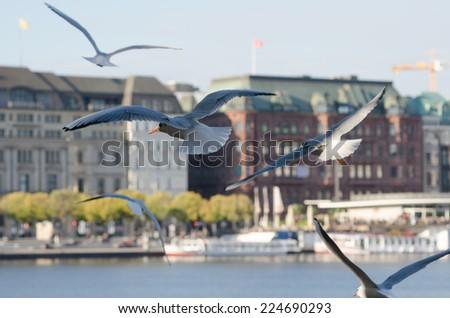 gulls, Hamburg Alster-pier (Germany) - stock photo