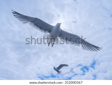 Gulls in the cloudy sky - stock photo