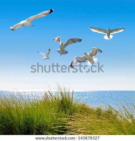 Gulls on the dunes to the sea. Seascape. - stock photo