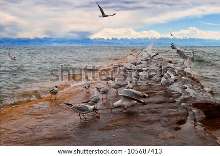 Gulls on the shore of Kyrgyz Seaside - stock photo