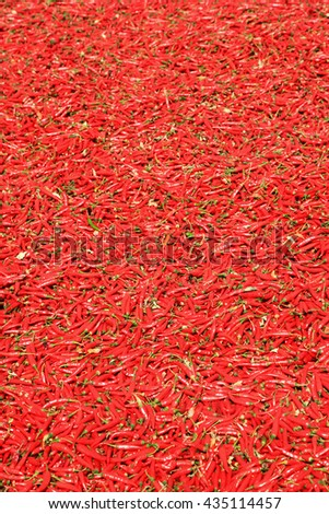 Guntur red chilies are world famous peppers primarily used to make spicy chili powder - stock photo