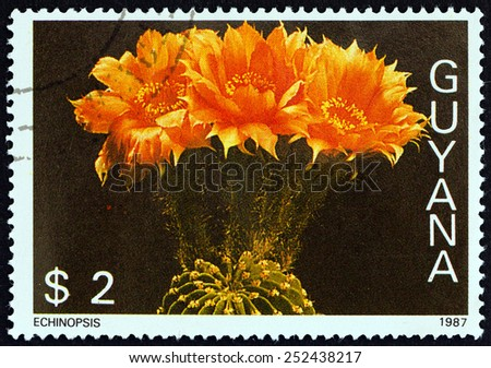 """GUYANA - CIRCA 1988: A stamp printed in Guyana from the """"Fauna and Flora - Birds, Fungi, Cats and Cacti """" issue shows Echinopsis, circa 1988.  - stock photo"""