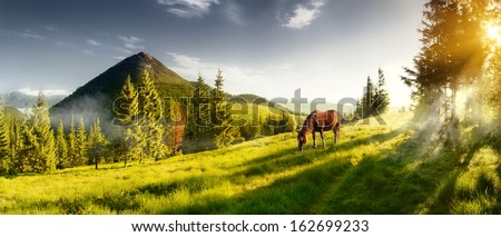 H horse in a pasture in the mountain valley. Landscape morning panorama of the mountains in summer - stock photo