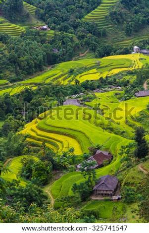 HA GIANG, VIETNAM - SEPTEMBER 19, 2015: Rice fields on terraced of Hoang Su Phi, Ha Giang, Vietnam. Rice fields prepare the harvest at Northwest Vietnam.Vietnam landscapes. - stock photo