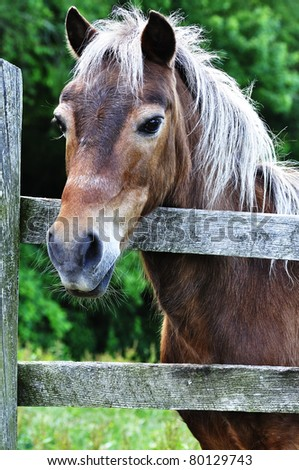 Hackney Horse by wooden fence, Webster County, West Virginia, USA - stock photo