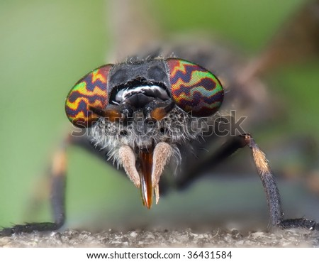 Haematopota pluvialis horse fly - stock photo