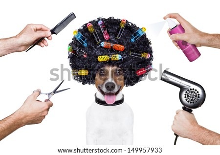 hairdresser  scissors comb dog spray spa wellness - stock photo