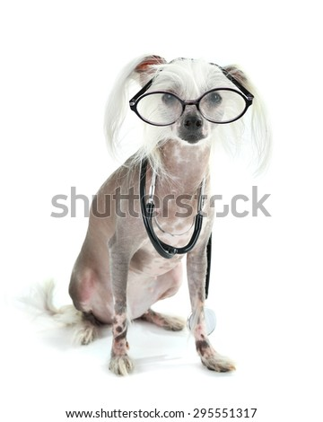 Hairless Chinese crested dog with glasses and stethoscope isolated on white - stock photo