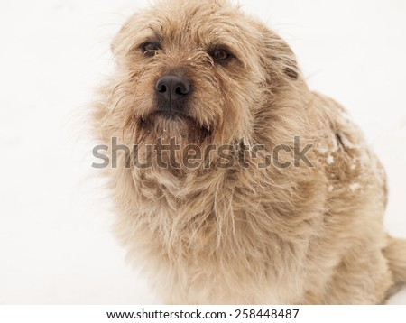 hairy little dog on a background of white snow - stock photo