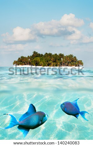 Half underwater shot of fish on sand sea floor and palm island - stock photo