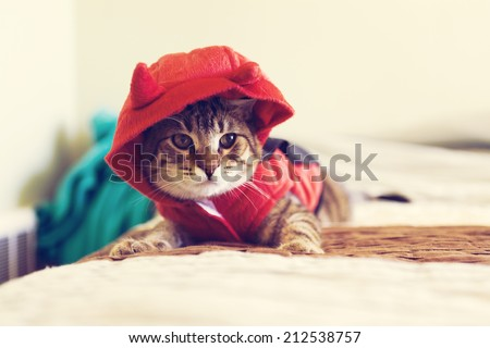 Halloween Kitty - stock photo