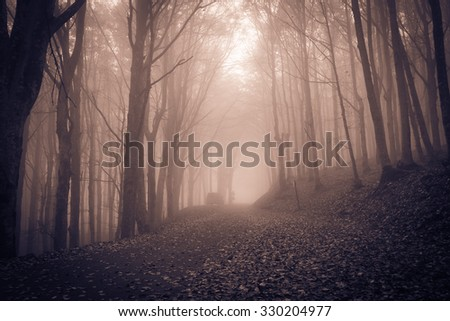 Halloween night in dark spooky forest. - stock photo