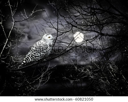 Halloween night theme with moon and owl against cloudy dark sky - stock photo