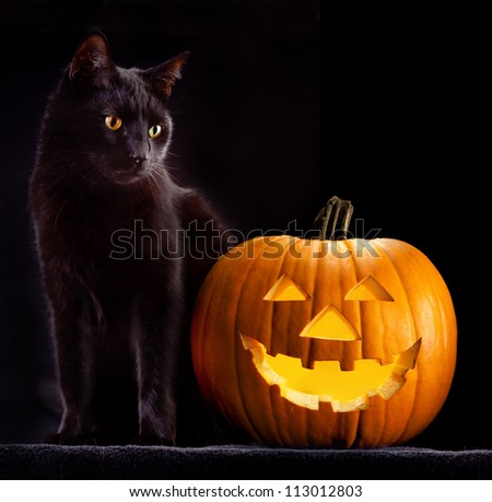 Halloween pumpkin and black cat scary spooky and creepy horror holiday superstition evil animal and jack lantern - stock photo