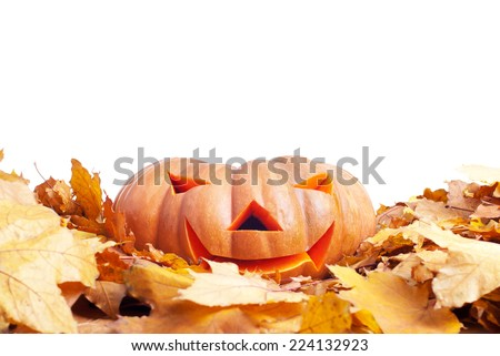 Halloween pumpkin on autumn leaves isolated on white background - stock photo