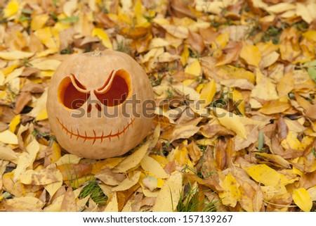 Halloween pumpkin on golden autumn leaves - stock photo