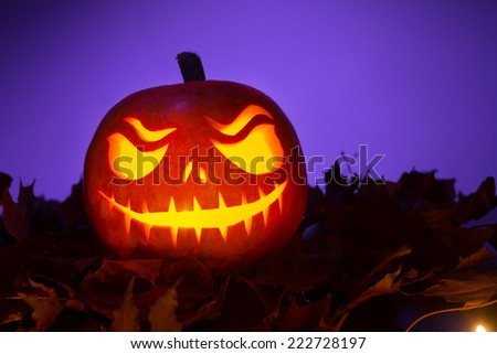 Halloween pumpkin with leafs on violet background - stock photo