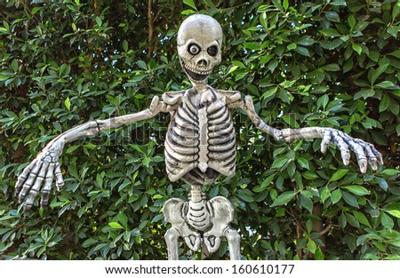 Halloween Skeleton hanging from a tree. - stock photo