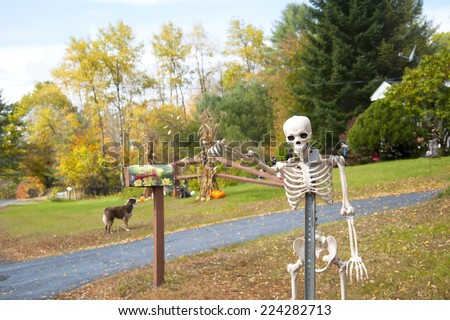 Halloween skeleton, Vermont - stock photo