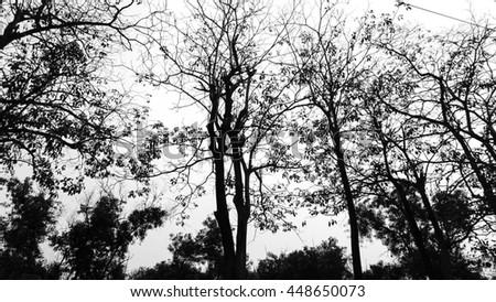 Halloween Tree - stock photo