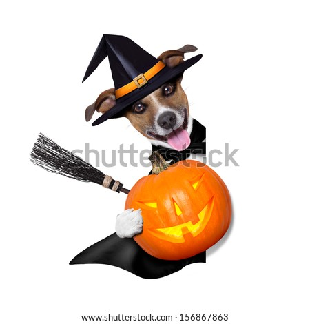 halloween witch dog holding a pumpkin behind a blank banner - stock photo