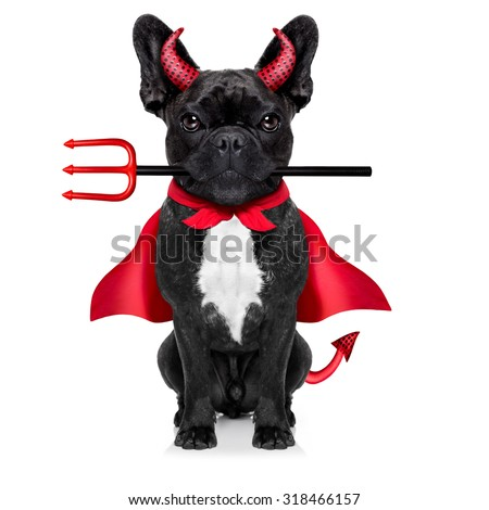 halloween  witch french bulldog  dog  dressed as a bad devil with red cape , isolated on white background - stock photo