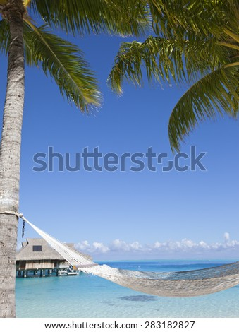 Hammock between palm trees and the sea - stock photo