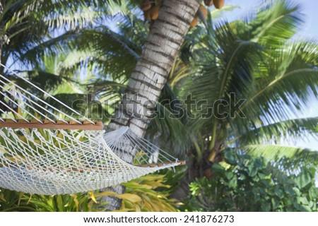 Hammock between Palm Trees - Rarotonga, Cook Islands, Polynesia - stock photo
