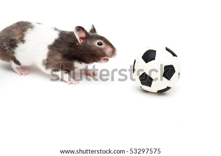 Hamster and a toy football - stock photo