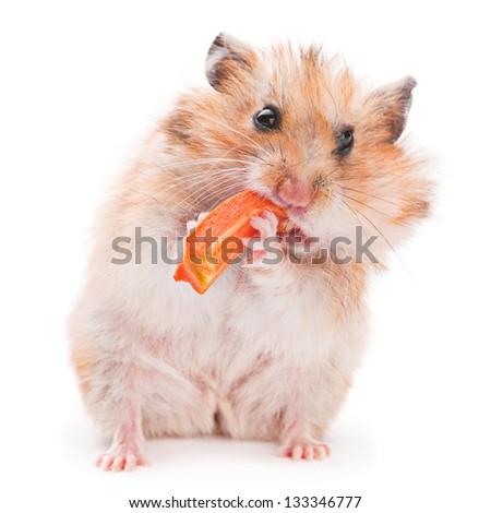 Hamster eating carrot on white - stock photo