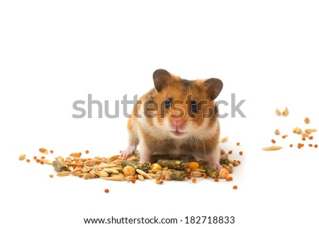 Hamster feed the hamster - stock photo