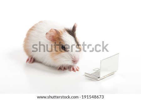 Hamster. Funny hamster working with laptop - stock photo