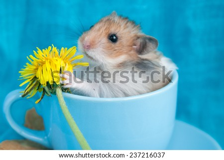 Hamster in the blue coffee cup with dandelion - stock photo