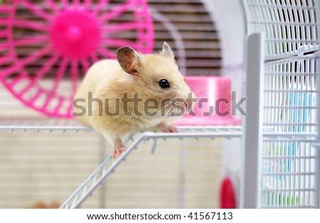 Hamster peeps out of the cell - stock photo