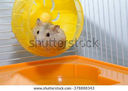 Hamster playing toy in the house  happily - stock photo