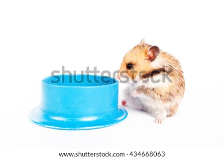 hamster sits near the trough isolated on white background - stock photo