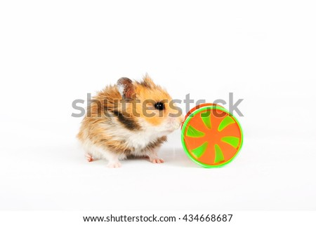 hamster wheel with a toy isolated on a white background - stock photo