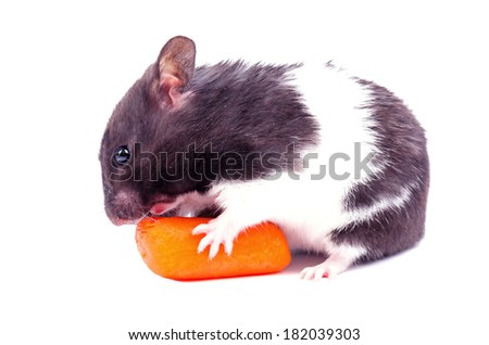 Hamster with small carrot - stock photo