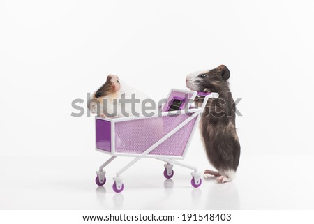 Hamsters. Funny hamsters with shopping cart - stock photo