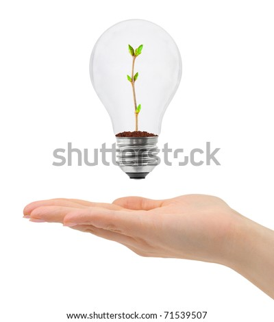 Hand and bulb with plant isolated on white background - stock photo