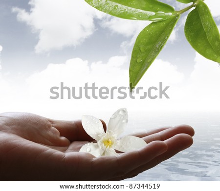hand and flower - stock photo