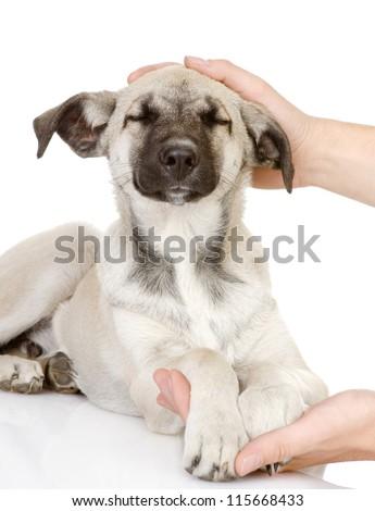 Hand caressing dog's head. isolated on white background - stock photo