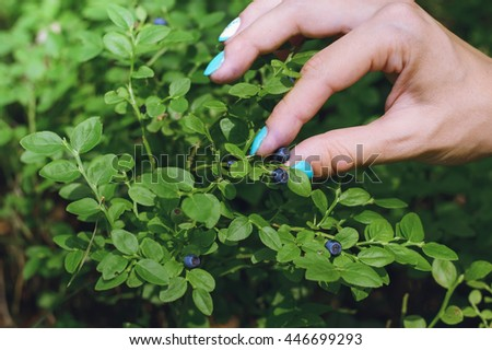 Hand collects blueberries in the forest - stock photo