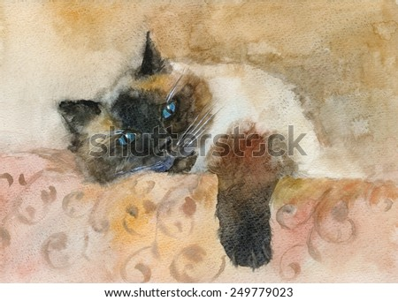 Hand drawing painting watercolor sleeping color-point cat  - stock photo