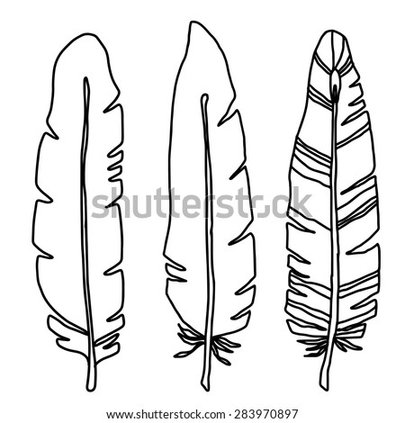 Hand drawn bird black feathers closeup isolated on white background set. Art scrapbook elements, sketch - stock photo
