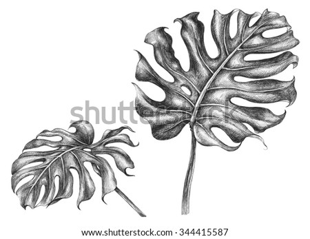 Hand drawn branches and leaves of tropical plants.  - stock photo