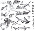 Hand-drawn collection. Marine life - SEA MONSTERS and Sharks. (drawing a black marker.) - stock photo