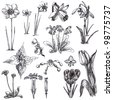 Hand-drawn collection. (Not just as a spring theme) - medicinal herbs and wild flowers meadows. (Drawing a black marker.) - stock photo