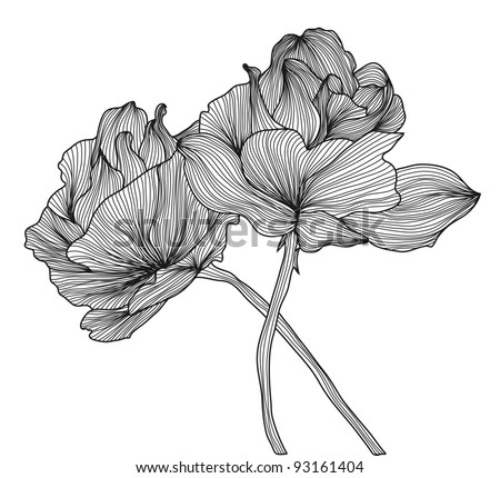 hand drawn decorative roses for your design - stock photo